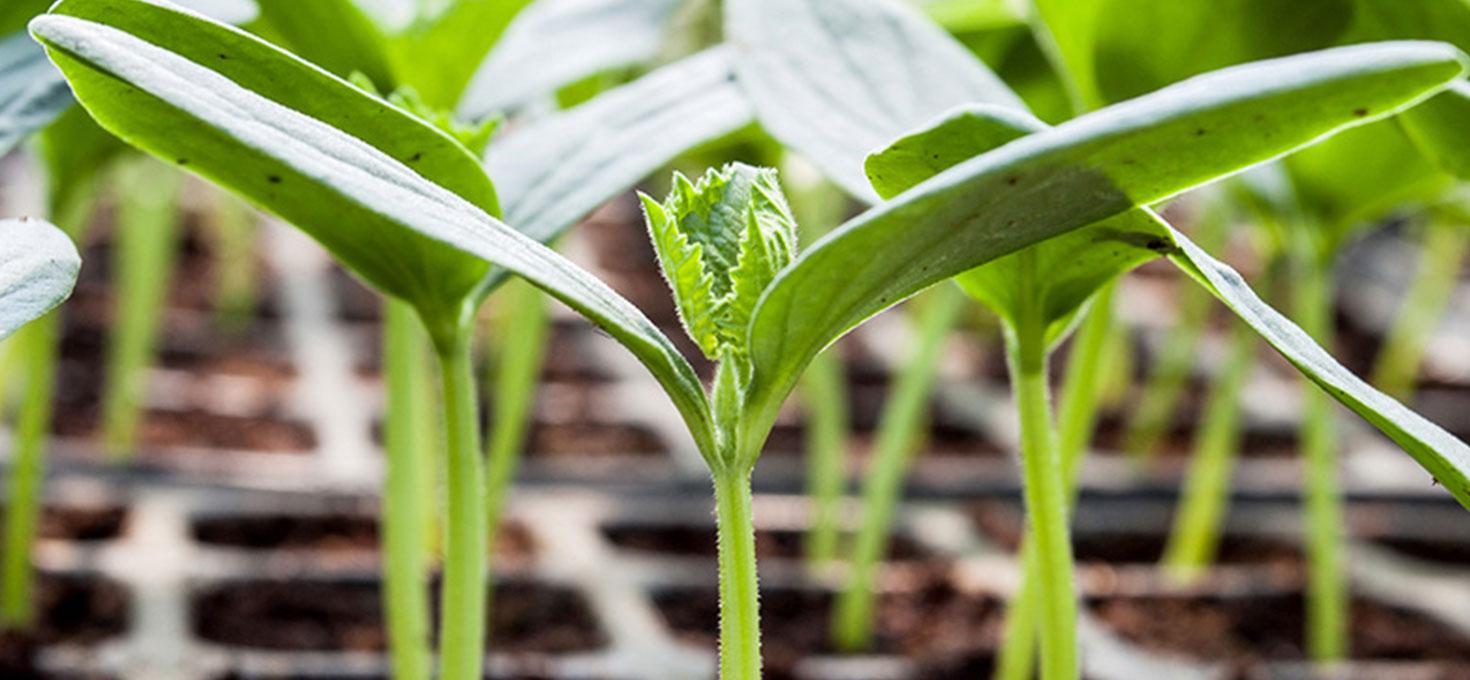 Seminiamo le piante da fiore