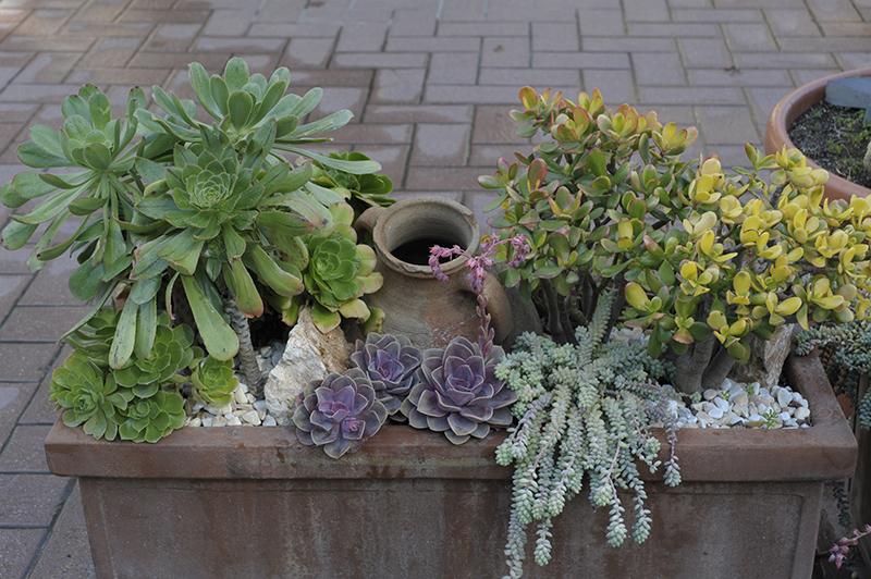 Un giardino in miniatura - Giardino in miniatura ...