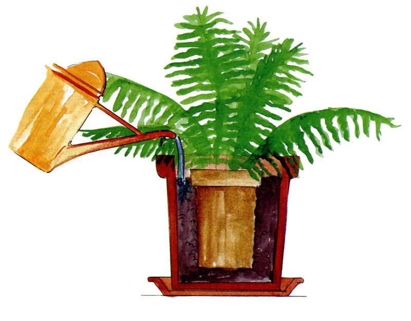 Due vasi sono meglio di uno - La felce pianta ...