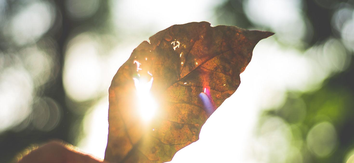 Se le foglie seccano