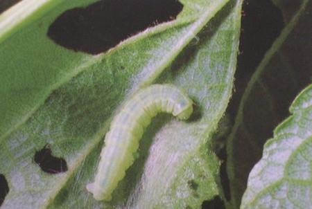 Vermi nel terreno for Parassiti piante