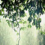 pioggia_foresta500