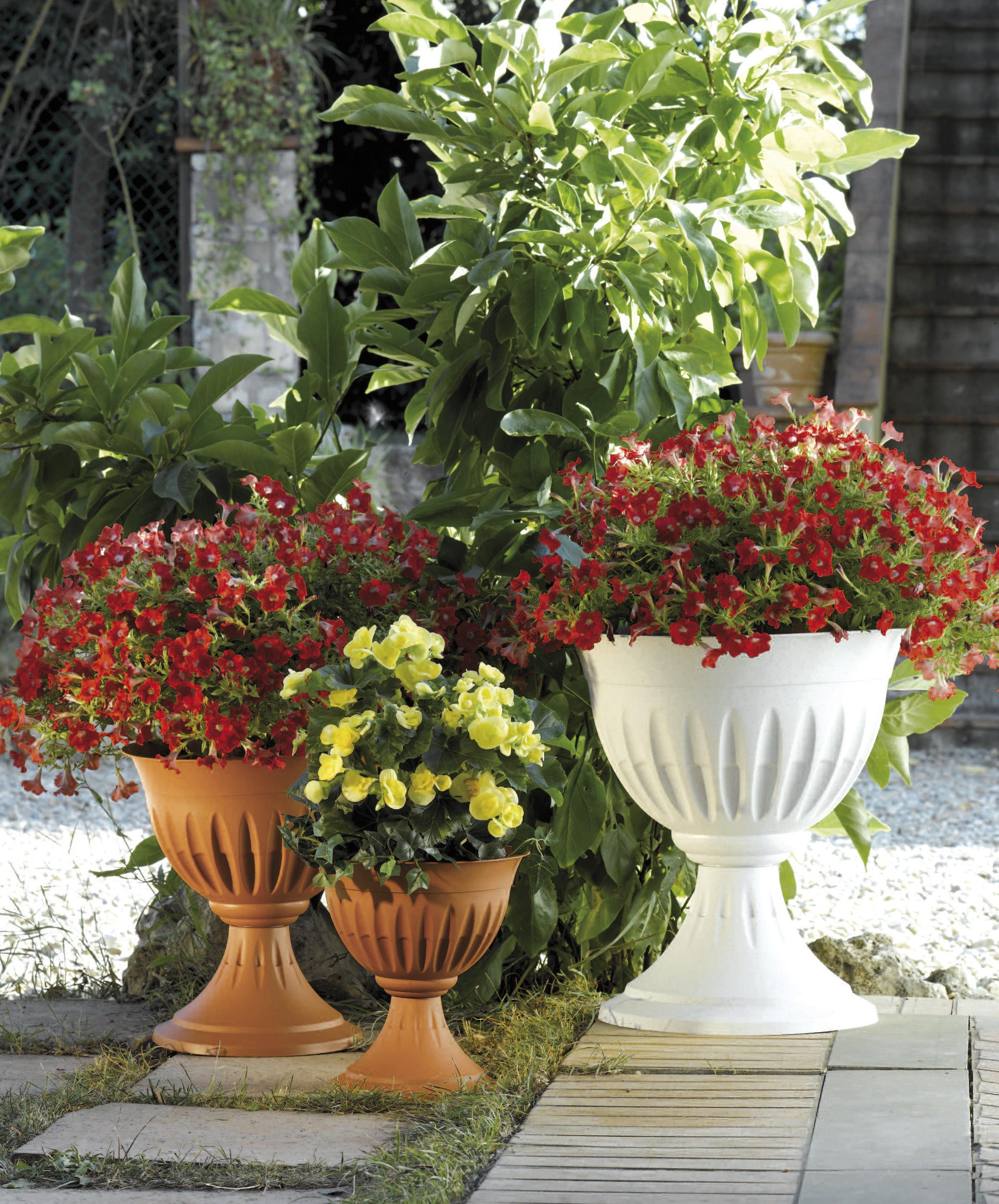 Carriole da giardino con alberelli da giardino fioriti for Alberelli fioriti da giardino