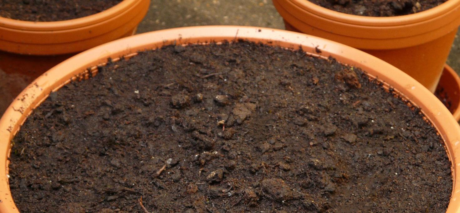 Terra Buona Per Giardino devo cambiare la terra ai vasi? – il giardino di bama
