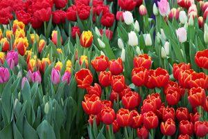 img-tutti-i-colori-della-primavera-01