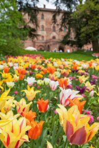 img-tutti-i-colori-della-primavera-02
