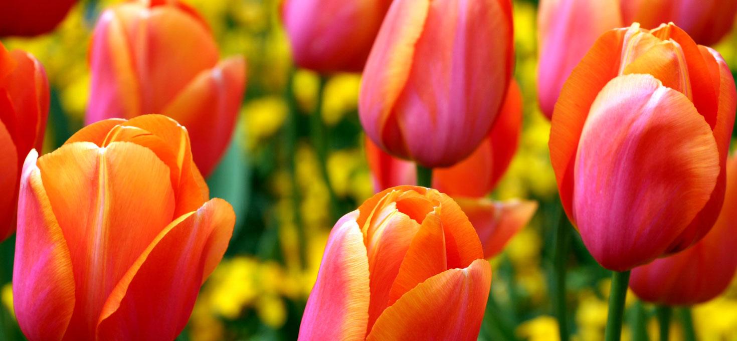 Tutti i colori della primavera