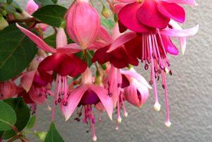 post-un-fiore-per-i-balconi-ombra