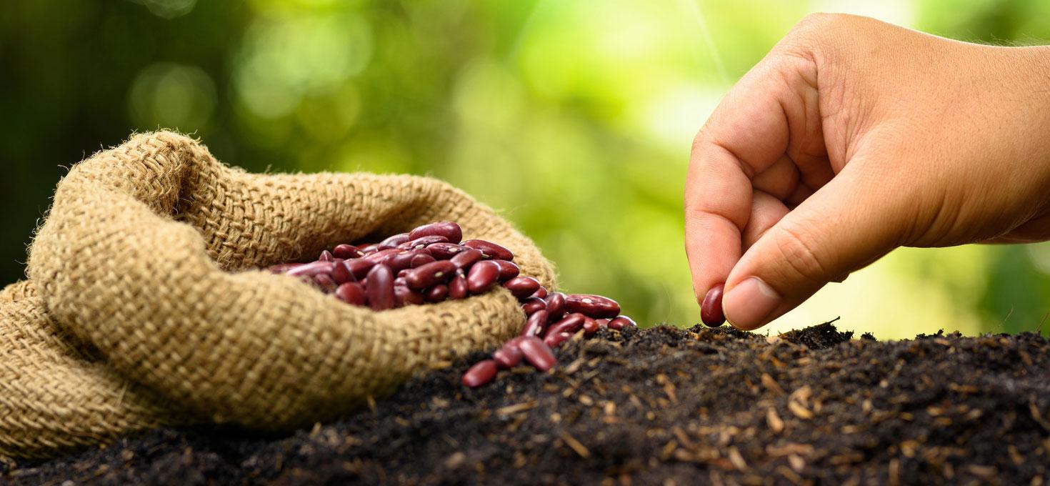 Raccogliamo i semi
