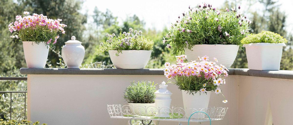 Rinvaso Piante Giardino Bama Primavera