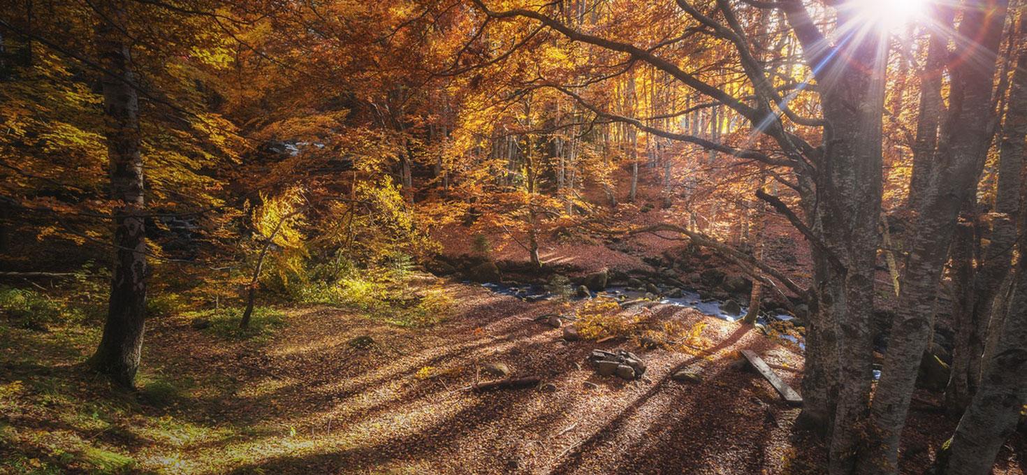 Perché le foglie cambiano colore