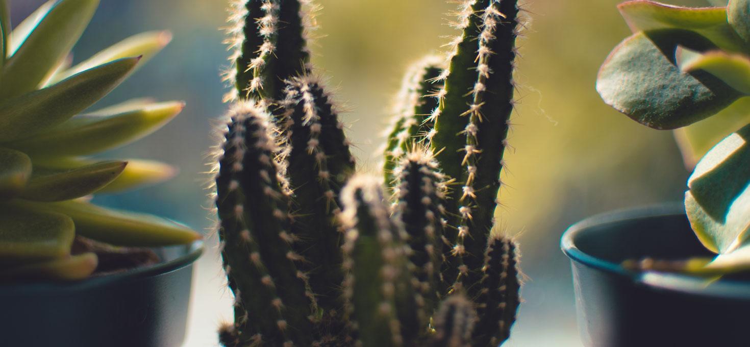 Le piante grasse amano il freddo