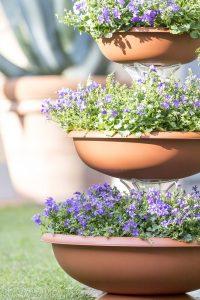 bama fioriera ciotola composizione giardinaggio